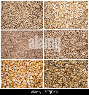 immagine composita di cereali per alimenti animali
