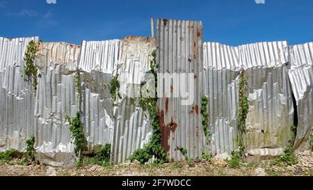 Primo piano di un recinto cantiere fatto da vecchie lamiere corrugate arrugginite, piante che strisciano in tutto, contro un cielo blu, Filippine, Asia Foto Stock