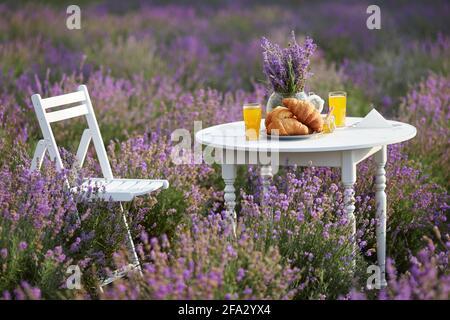 Tavolo di legno bianco servito con deliziosi croissant freschi, bicchiere di succo d'arancia, barattolo di miele con cucchiaio di legno e vaso con bouquet di lavanda e sedia. Decorazione stupefacente in campo di lavanda fiorente.