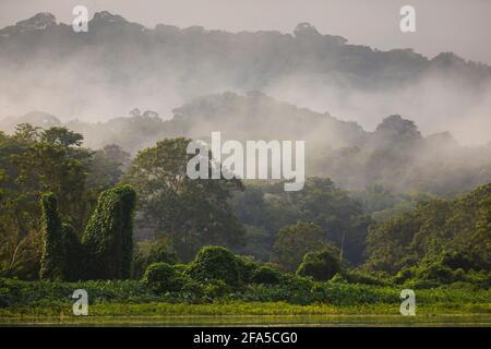 Misty foresta pluviale in primo mattino luce sul lato orientale di Rio Chagres, Soberania parco nazionale, Repubblica di Panama, America Centrale.