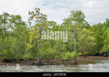 Navigando lungo Sibu Laut-Telaga Air River Bank, Matang, Sarawak, Malesia