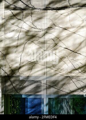 particolare della geometria della parete con linee organiche della vite