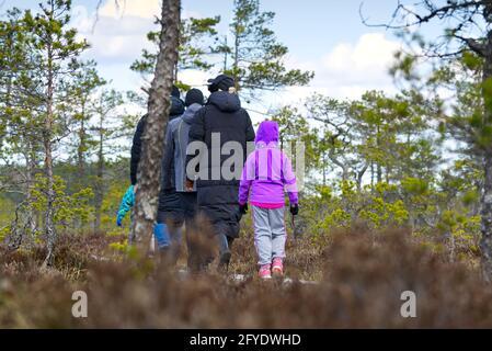 Gruppo di giovani che camminano lungo duckboards sulla palude. Esplorazione della natura. Amici escursioni nella palude o sentiero palude, lungomare. Estonia