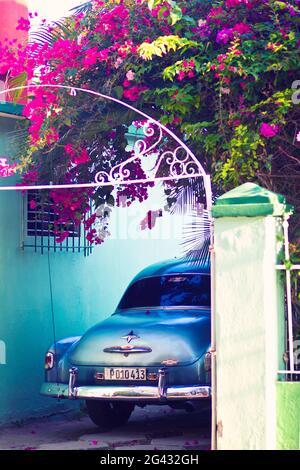 Auto classica parcheggiata sotto l'albero di bougainville