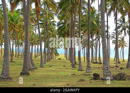 Un percorso vuoto tra le file di palme da cocco sulla spiaggia