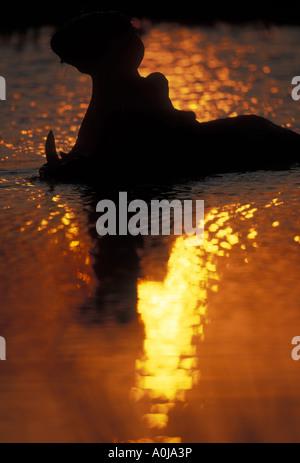 Il Botswana Moremi Game Reserve ippopotamo Hippopotamus amphibius sbadigli in silhouette in piscina al tramonto Foto Stock