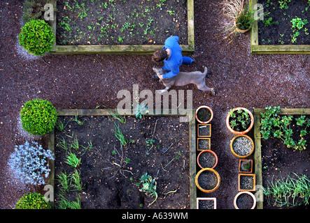Un giardiniere con il suo cane passeggiate tra letti sollevata con bordi in legno e pentole di box e lavanda in Foto Stock