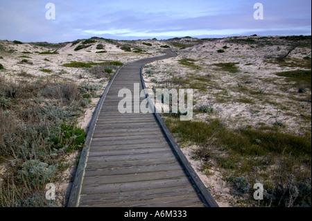 Il Boardwalk attraverso le dune lungo la costa della California vicino Carmelo Foto Stock