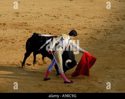 La corrida a Siviglia Foto Stock
