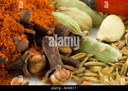 Una selezione di spezie contro uno sfondo bianco Foto Stock