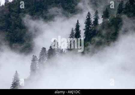 La nebbia sale dalla foresta durante il monsone estivo Kham Tibet orientale della provincia del Sichuan in Cina Foto Stock
