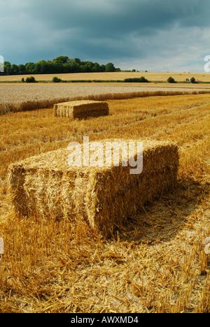Balle di fieno in un parzialmente ritagliato campo dopo la mietitura Wiltshire, Inghilterra uk gb eu europe Foto Stock