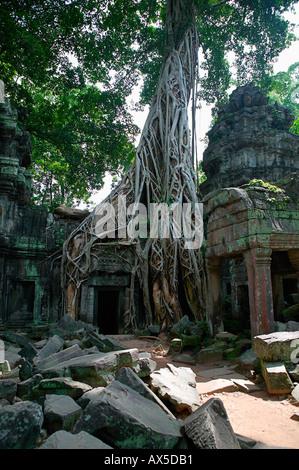 Ta Phrom Jungle Tempio templi di Angkor Siem Reap Cambogia Asia Foto Stock