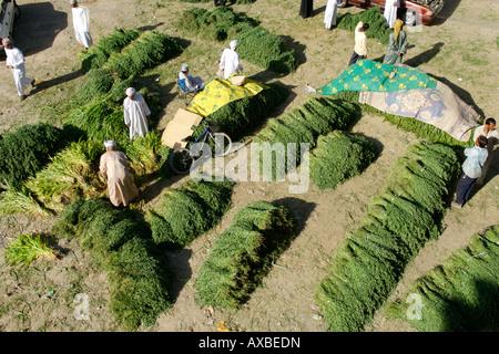 I foraggi per la vendita nel souk outdoor in Nizwa nel Sultanato di Oman. Foto Stock
