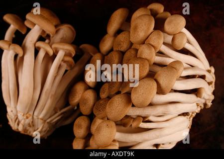 I grappoli di marrone di funghi di faggio Foto Stock