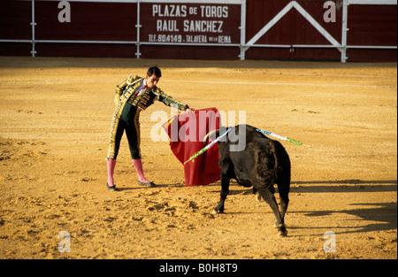 Torero tenendo il suo mantello rosso nella parte anteriore di un insanguinato black bull durante una Corrida nella Foto Stock