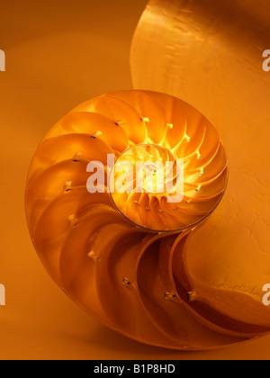 Nautilus bisecato Shell nella metà che mostra le camere Nautilus Pompilus genere Nautilus Foto Stock