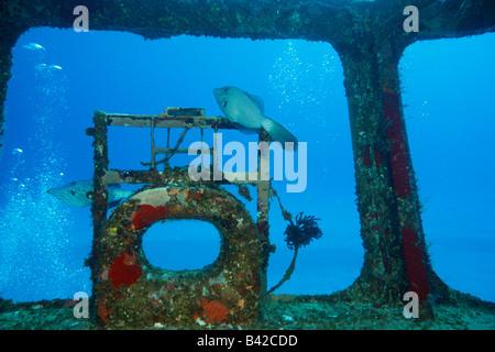"""Vista interna di un ponte di nave militare relitto """"Felipe Xicotencatl' con due residenti Filefishes Scrawled Foto Stock"""