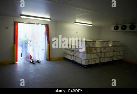 La partita di carni Maldive tonno detenute in magazzino freddo presso un aeroporto di Heathrow magazzino prima della Foto Stock