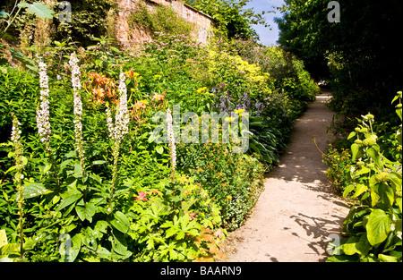 Percorso giardino noto come vergine a piedi tra piante erbacee perenni confini in giardini Waterperry Wheatley Oxfordshire Foto Stock