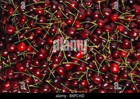 Texture di sfondo di carni le ciliegie di Bing Foto Stock