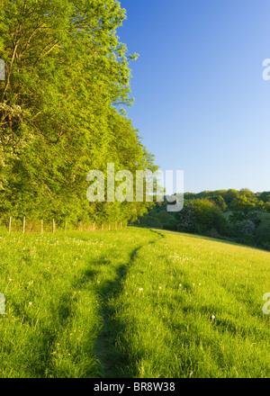 Percorso attraverso il campo, North Downs a Ranmore, vicino a Dorking, Surrey, Regno Unito Foto Stock