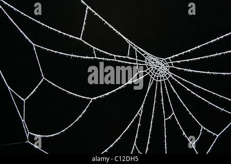 40,176.06388 gelido di ghiaccio freddo satinato bianco frosty spider web su nero su sfondo nero Foto Stock