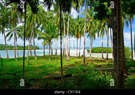 Il Palm Grove su Ppalm treeaniki Isola, Raja Ampat isole vicino Papua occidentale, in Indonesia nel triangolo di Foto Stock