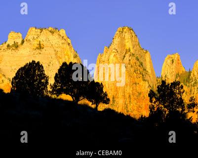 Stagliano alberi e il tempio e le torri della Vergine. Parco Nazionale di Zion, Utah Foto Stock