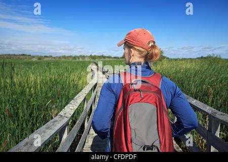 Donna escursionismo sulla passerella di legno in Grassy Narrows Marsh. Isola Hecla Parco Provinciale, Manitoba, Foto Stock