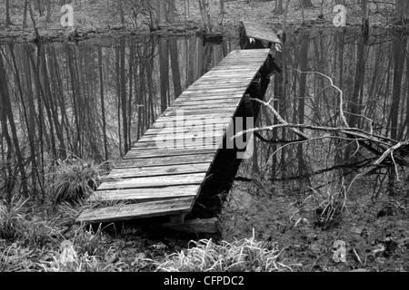 Una passerella di legno su una palude etereo in bianco e nero, Connecticut USA Foto Stock