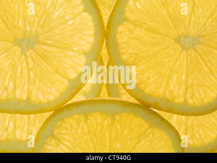 Citrus limon, limone Foto Stock