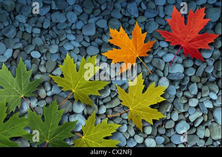 Foglie di autunno floating oltre un flusso o torrente di lisce rocce di fiume come un tema stagionale concetto di Foto Stock