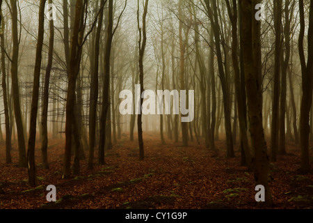 Alberi nella nebbia all'alba Foto Stock