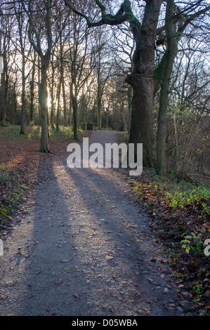 Un percorso attraverso l 'hotel Astrid boschi nel tardo autunno. Foto Stock