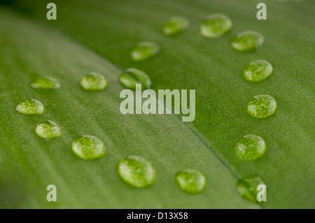 Forma di cuore gocce di rugiada sulla foglia verde con profondità di campo Foto Stock