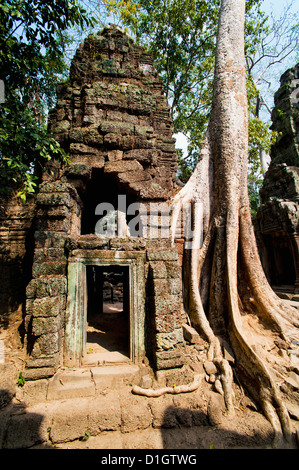 Radici sovradimensionate e rovine di Ta Prohm tempio, i templi di Angkor, Siem Reap, Cambogia, Indocina, Asia sud Foto Stock