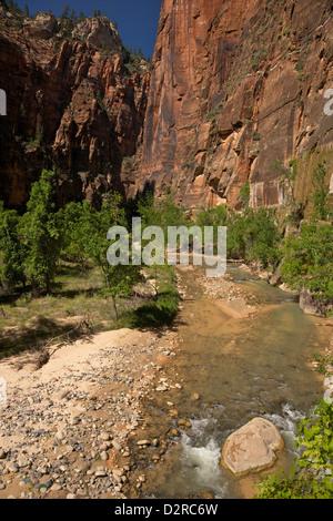 Riverside Walk in Vergine River Canyon, a nord del tempio di Sinawava, Parco Nazionale Zion, Utah, Stati Uniti d'America Foto Stock