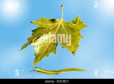 Foglia di autunno. Foto Stock