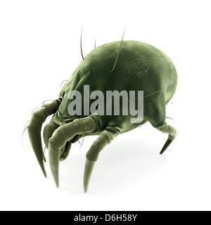 Acaro della polvere, artwork Foto Stock