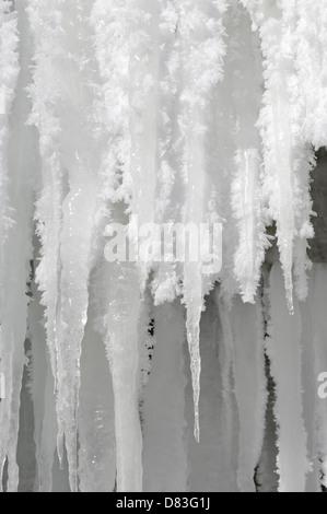 Ghiaccioli con soft rime la formazione di ghiaccio su di loro pende da una cascata ghiacciata. Ontario in Canada. Foto Stock