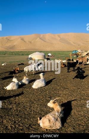 Mongolia, vicino Dalanzadgad, deserto dei Gobi a Khongoryn Els (dune di sabbia), Ger (Yurt), capre e pecore Foto Stock