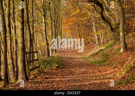 Pezzata autunno la luce solare su una tranquilla, deserte percorso in arancione marrone caduta foglie in scenic Foto Stock