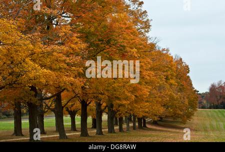Fila di colori d'autunno alberi in macina Twp., New Jersey, STATI UNITI D'AMERICA Foto Stock