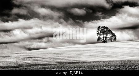 Minimalista immagine monocromatica di una Lone Tree sulla cima di una pendenza campo gessoso nel Wiltshire, Regno Foto Stock