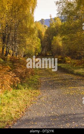Un viottolo fiancheggiato da alberi di betulla in autunno portando ad un cancello Foto Stock