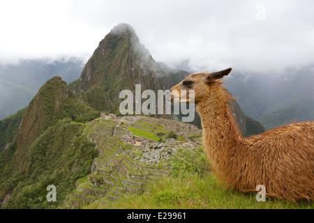 Bellissima e misteriosa Machu Picchu la Città perduta degli Incas, nelle Ande peruviane, a sunrise. Foto Stock