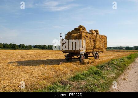 Strohballen Strohwagen Ernte ernten Stroh Ballen Wagen Trecker Traktor Landmaschine Landmaschinen Trasporti Strasse Foto Stock