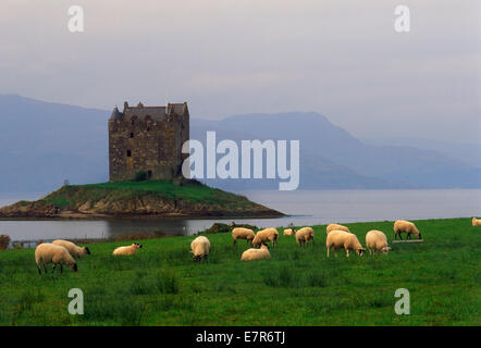 Il castello di Stalker in Argyllshire vicino a Glencoe sul Loch Linnhe lungo la costa ovest della Scozia Foto Stock