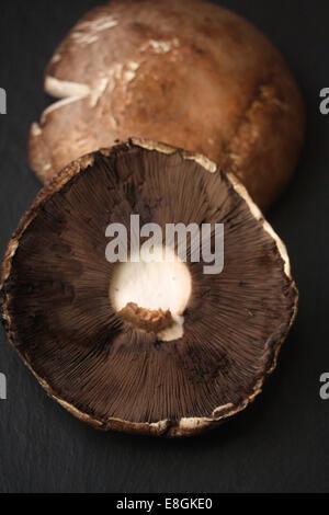 Portobello dei tappi a fungo Foto Stock